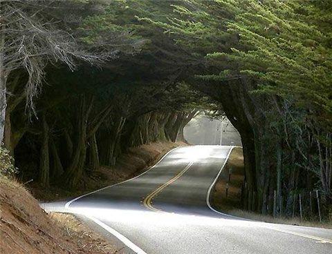 tunnel-of-trees.jpg